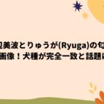浜辺美波とりゅうが(Ryuga)の匂わせ画像!犬種が完全一致と話題に